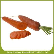 Cenouras por atacado