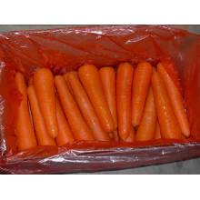 Упаковочная упаковка / Свежий морковь