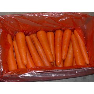 Lose Verpackung / Neue frische Karotte