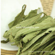 Stevia menthes