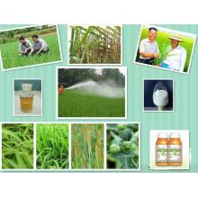 Activateur de croissance des plantes Anti Sprout pour les pommes de terre 50% Ec (CIPC) Chlorpropham