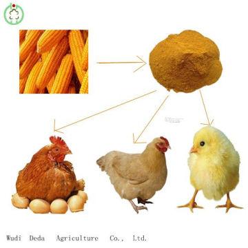 Venda quente 60% de farinha de glúten de milho amarelo Comida de frango