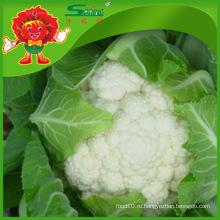 Украшение цветной капусты
