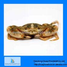 Novo caranguejo de lama viva congelada de alta qualidade
