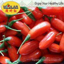 Nêspera Wolfberry Goji Lycium Chinense