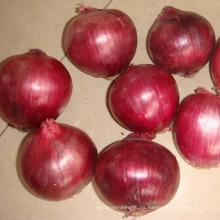 Proveedor grande de la cebolla roja fresca de calidad superior de 4-7cm