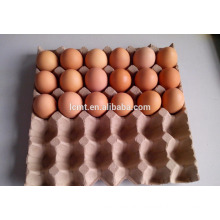 In may the 30 holes egg carton promotion price lowest