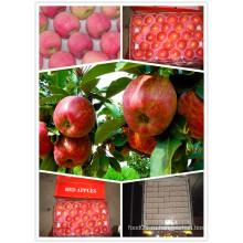 Китайский стандарт экспорта Red Star Apple