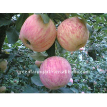 Harvester golden delicious manzana hina fuji apple precio