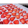 IQF Freezing Organic Strawberry HS-16090907