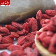 Производитель Оптовая цена новый китайский волчья ягода