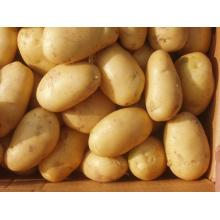 Новый свежий золотой картофель