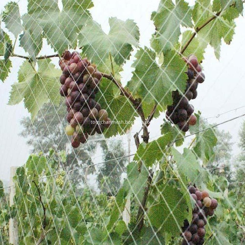 agricultural anti bird net