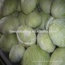 2017 new crop chinese fresh flat cabbage