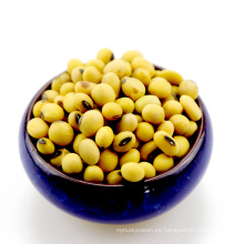Frijoles de soja no soja, amarillo, de soja, para alimentos de animales con aceite de tofu