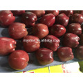 Highland Red Apples