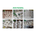 2018 First Grade Chinese normal white garlic factory wholesale price