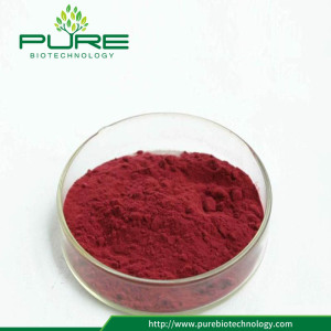 High quality cranberry extract with anthocyanin 25%