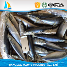 Congelado iqf pacific mackerel