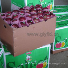with Dark Red Color Red Delicious Apple/ Huaniu Apple