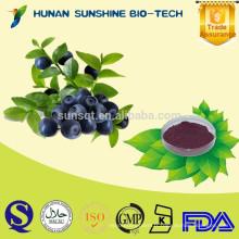 Poudre de myrtilles fraîches 100% de myrtilles fraîches de fruit naturel / anthocyanidines 25%