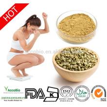 Extrait de grain de café vert naturel avec 50% d'acide chlorogénique