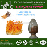 Cordycepin , Cordycepin Powder , Cordyceps Extract