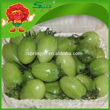 Top grade fresh cherry tomato market price for green cherry tomatoes