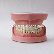 Estándar K Tipo dientes extraíbles Anatómica Dental Modelo 13004