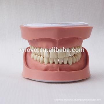 Modelo anatômico dental 13004 dos dentes removíveis padrão de K