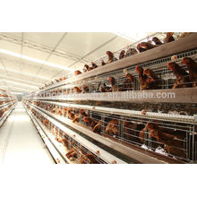 good quality and best sale chicken cage for sale in philippines