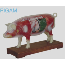 Pig Acunpuncture Model