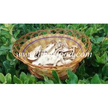 Cogumelo Porcini Seco Competitivo Bom Preço