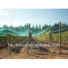 Landwirtschaft Insekt Mesh / Obstbaum Mesh Netting