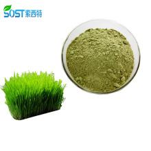 SOST Private Label Bulk Organic Wheatgrass Juice Powder for Sale