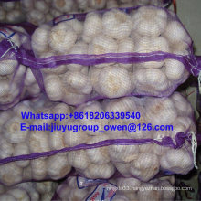New Crop Raw Normal/Pure White Garlic 5.0cm