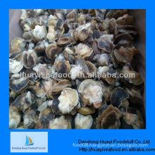 Supply new season fresh moon snail meat