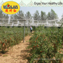 Medlar Healthy Food Dried Goji