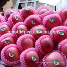 china fresh apple exporter