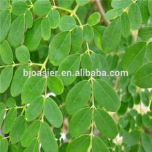Hot sale Indian moringa oleifera leaf extract capsules