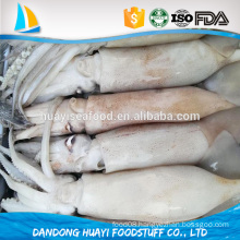 wholesale best season whole new frozen baby squid