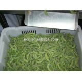 Frozen Soy Bean pod From Hebei