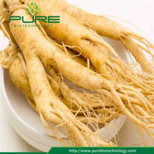 High quality 100% Pure White Ginseng Root