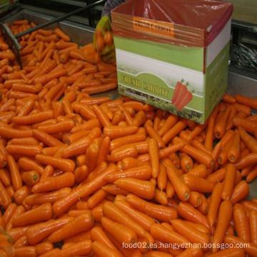 Zanahorias frescas con certificado HACCP FDA