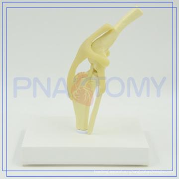 ПНТ-0877 высокого качества анатомические собака рассечение модель для продажи