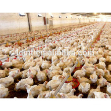 Broiler Poultry Farm Automatic Broiler Feeding System