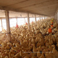 Chengdu Iron Amino Acid Chelate Feed Grade