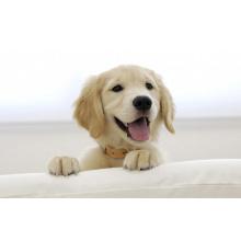 (Ivermectin) - Medicamentos veterinarios, resistentes al parásito Ivermectin