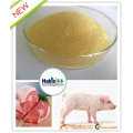 Porc / cochon de croissance spécialisé Additif alimentaire multi-enzyme / produit chimique / agent