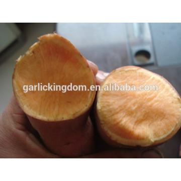 China patata dulce / patata dulce / polvo de patata dulce